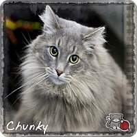 Adopt A Pet :: Chunky - Germantown, OH