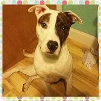 Adopt A Pet :: JACKSON - NYC, NY
