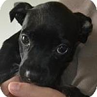 Adopt A Pet :: LULU - Mahopac, NY