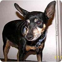 Adopt A Pet :: Chunkers - Scottsdale, AZ