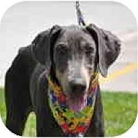 Adopt A Pet :: Kai - Kingwood, TX