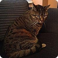 Adopt A Pet :: Frankie - 4 Paw Declaw - East Hanover, NJ