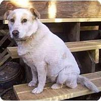 Adopt A Pet :: Cammie - Phoenix, AZ