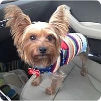 Adopt A Pet :: Elmo - Miami, FL