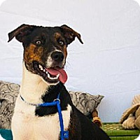 Adopt A Pet :: Monster - Houston, TX