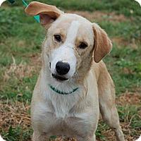 Adopt A Pet :: Gilbert - Portland, ME