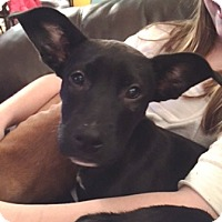 Adopt A Pet :: Lilly Woods-Adopted - Turnersville, NJ