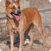 Adopt A Pet :: Tawny - Bodega, CA