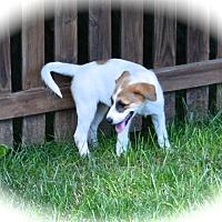 Adopt A Pet :: Polar - Ijamsville, MD