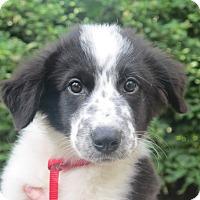 Adopt A Pet :: Flower - Hagerstown, MD