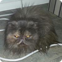 Adopt A Pet :: Minnie Mouse - Gilbert, AZ