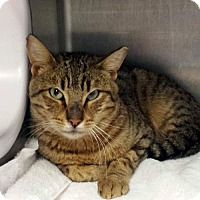 Adopt A Pet :: Tobias - Madison, WI