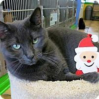Adopt A Pet :: Ashah - Northbrook, IL