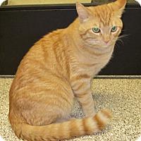 Adopt A Pet :: Chachi - Georgetown, TX