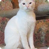 Adopt A Pet :: Nacho - Witter, AR