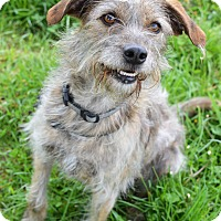 Adopt A Pet :: Lucky - Delaware, OH