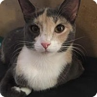 Adopt A Pet :: French Vanilla - Vass, NC