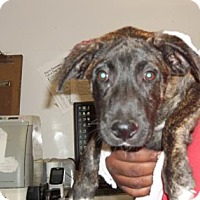 Adopt A Pet :: Royce (Lonely Heart) - Gulfport, MS
