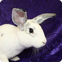 American Mix for adoption in Jackson, Michigan - Thumper