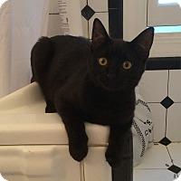 Adopt A Pet :: Susannah - Santa Rosa, CA