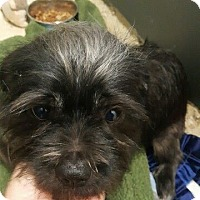 Adopt A Pet :: Ziggy - Mary Esther, FL