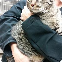 Adopt A Pet :: Cyrus - Chippewa Falls, WI