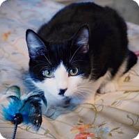 Adopt A Pet :: Smudge - Wichita, KS