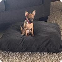 Adopt A Pet :: Daphne - Cincinnati, OH