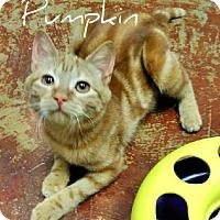 Adopt A Pet :: Pumpkin - Laplace, LA