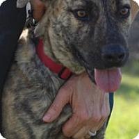Adopt A Pet :: Newton - Von Ormy, TX