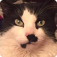 Adopt A Pet :: Amethyst - New York, NY