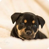 Adopt A Pet :: Iver - greenville, SC