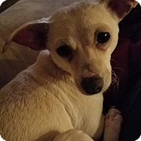 Adopt A Pet :: Miss D - Bonney Lake, WA