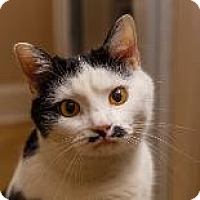 Adopt A Pet :: SENOR MUSTACHE - Decatur, GA