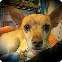 Adopt A Pet :: Jimmy - Tijeras, NM