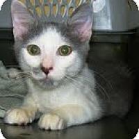 Adopt A Pet :: * Jack - Winder, GA
