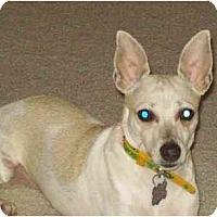 Adopt A Pet :: Abbott - Jacksonville, FL