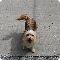Adopt A Pet :: Chloe - Muskegon, MI
