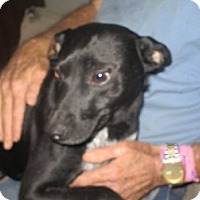 Adopt A Pet :: Chance - Floresville, TX