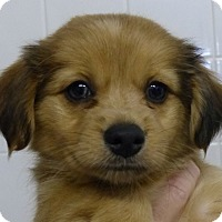 Adopt A Pet :: Tristin - S. Pasedena, FL