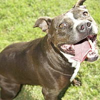 Adopt A Pet :: Gidget - Byhalia, MS
