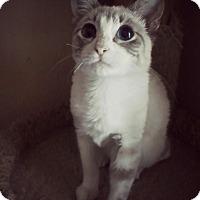 Adopt A Pet :: Aurora - Mansfield, OH