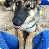 Adopt A Pet :: Athena - Dripping Springs, TX