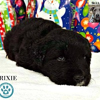 Adopt A Pet :: Trixie - Kimberton, PA