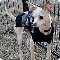 Adopt A Pet :: Nolan - Meridian, ID