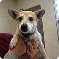 Adopt A Pet :: Lil Girl - Las Vegas, NV