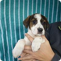 Adopt A Pet :: Lynn - Oviedo, FL