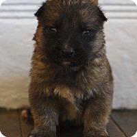 Adopt A Pet :: DEWALT - Winnipeg, MB
