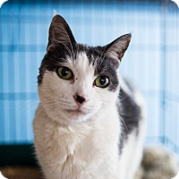 Adopt A Pet :: Cagney - Brooklyn, NY