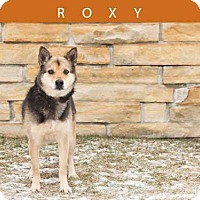 Adopt A Pet :: ROXY - Toronto, ON